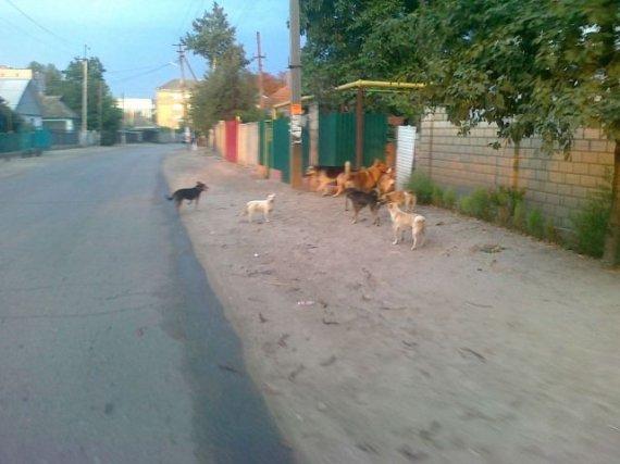 Письмо в редакцию (собаки на улицах города)