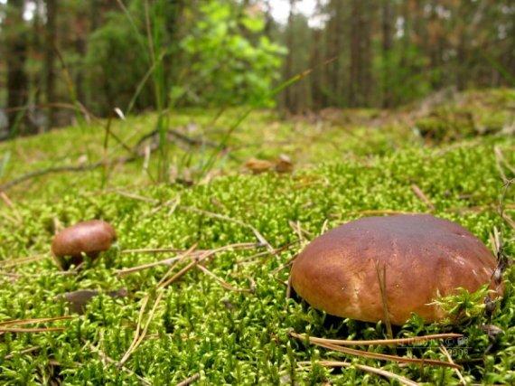Грибники продолжают теряться в лесу
