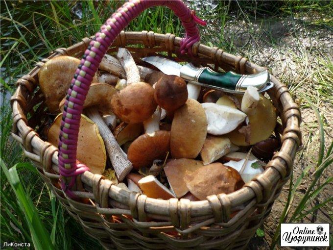 В цюрупинском лесу опять искали грибника