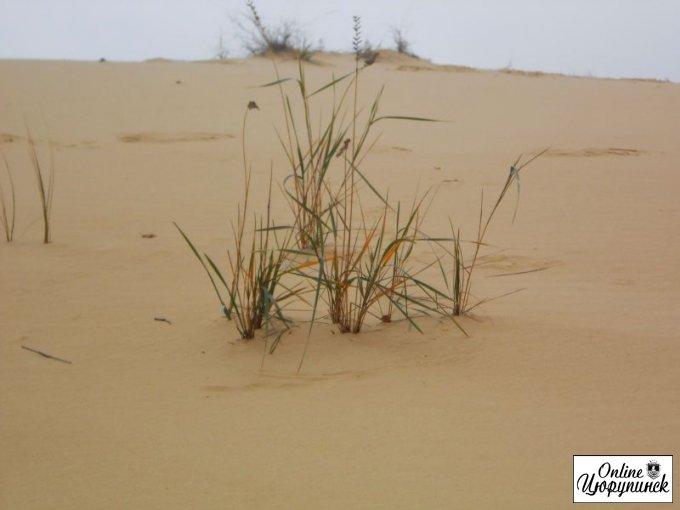 26-28 жовтня у Олешківських пісках відбулися змагання зі спортивного орієнтування