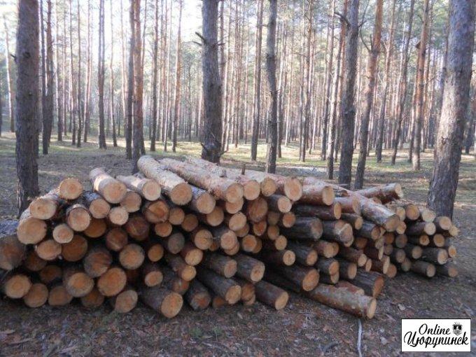 Офіційна інформація щодо незаконної порубкуи лісів Цюрупинського району