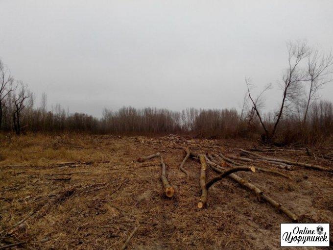 Официальный ответ, относительно вырубки деревьев между Херсоном и Цюрупинском (фото)