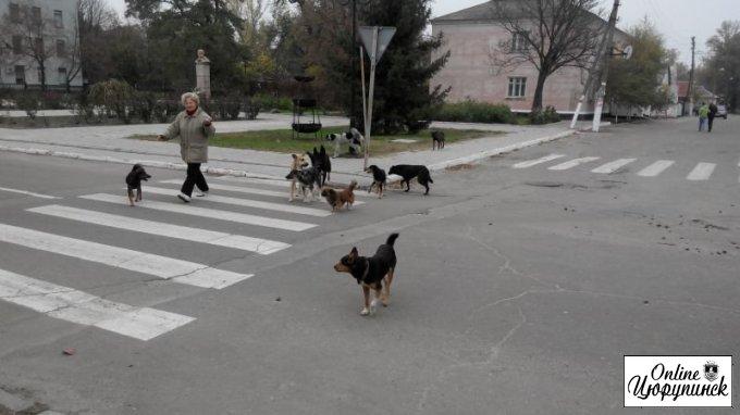 Цюрупинская власть в очередной раз планирует заняться бездомными собаками и раздельным сбором мусора