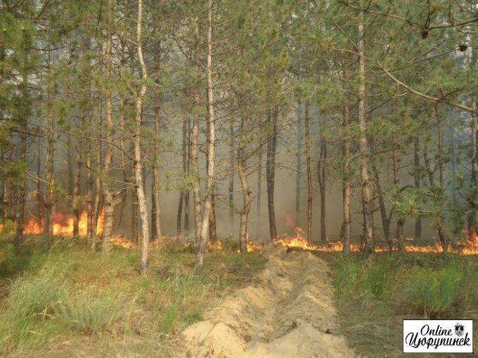 Крупный лесной пожар полностью ликвидирован (фото)
