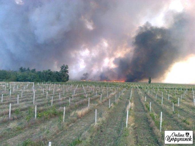 Лісова пожежа, що виникла поблизу с. Костогризово, ліквідована