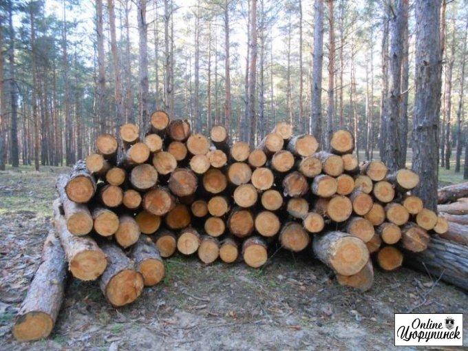 Так что же на самом деле случилось в Цюрупинском лесу?