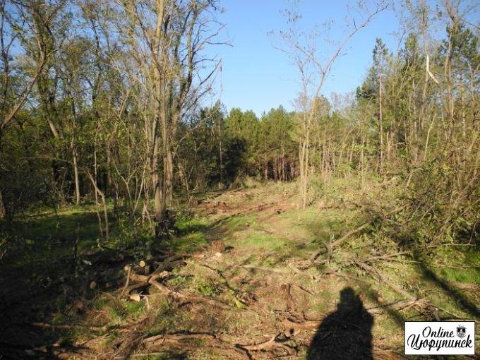 Открытое письмо в министерство экологии относительно вырубки леса (фото)