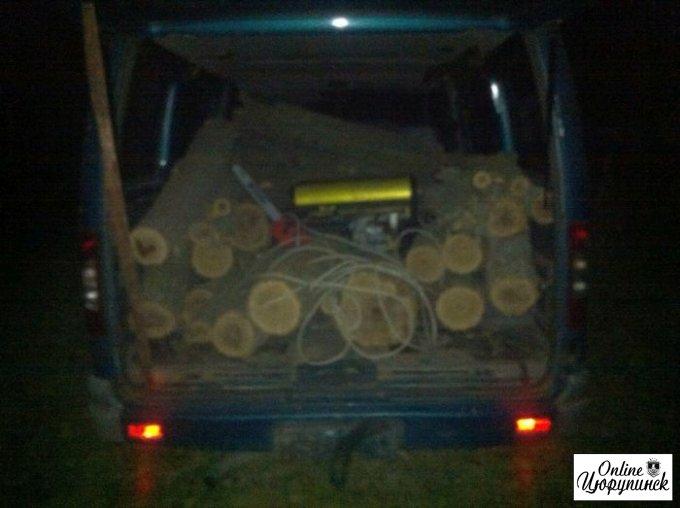 Остановлена незаконная вырубка деревьев (фото)