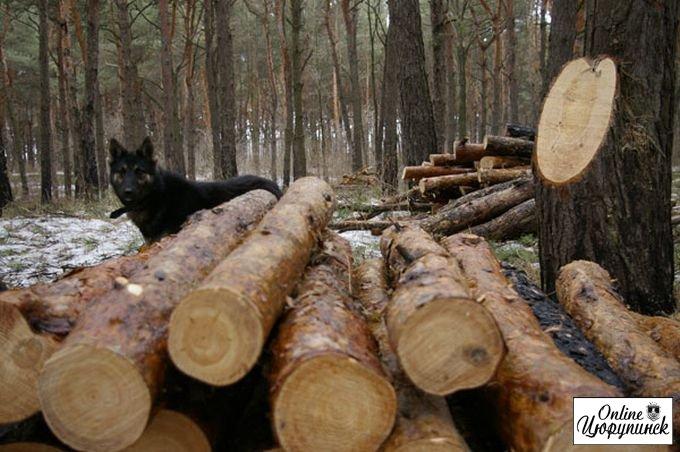 Направлено до суду кримінальне провадження відносно організатора порубки дерев