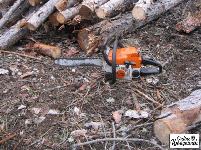 Затримано робітників лісгоспу які сдійснювали незакону вирубку дерев (фото)