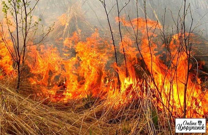 Лісова пожежа біля Раденьска ліквідована вчасно