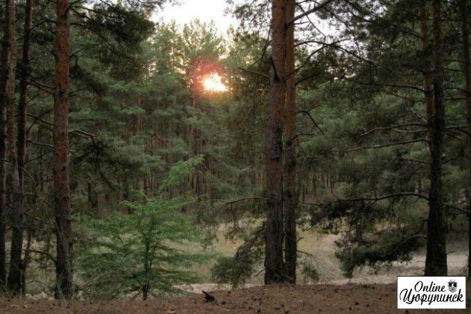 Враження після відпочинку в цюрупинському лісі на травневі свята