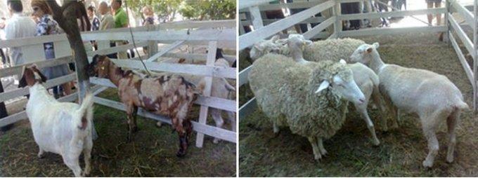 Херсонська делегація повернулася з міжнародної науково-практичної конференції «Стан та перспективи розвитку вівчарства в Україні»