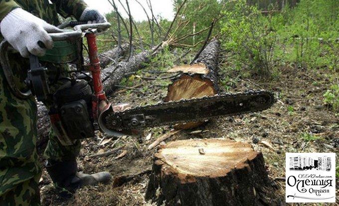 Покарання у вигляді 3 років обмеження волі за незаконну порубку лісу