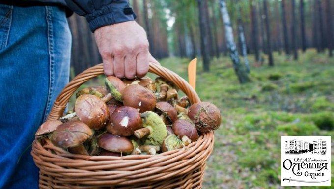 У Цюрупинському лісі знайшли заблукалого грибника