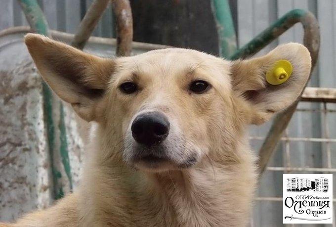 В Цюрупинске системно займутся бездомными животными