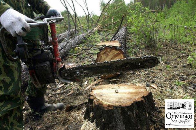Охорона лісових насаджень