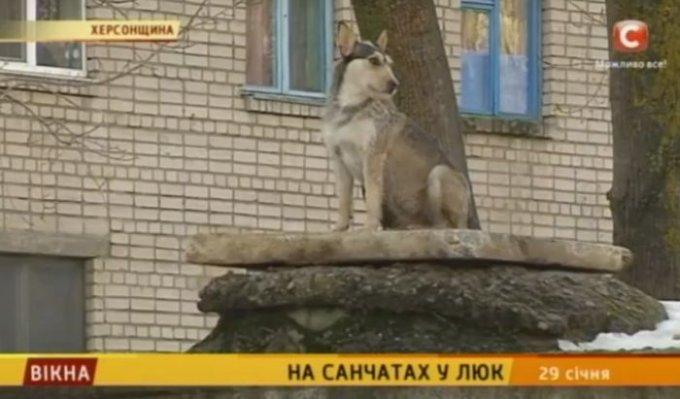 О несчастном случае и открытых люках в Цюрупинске сняли сюжет на СТБ