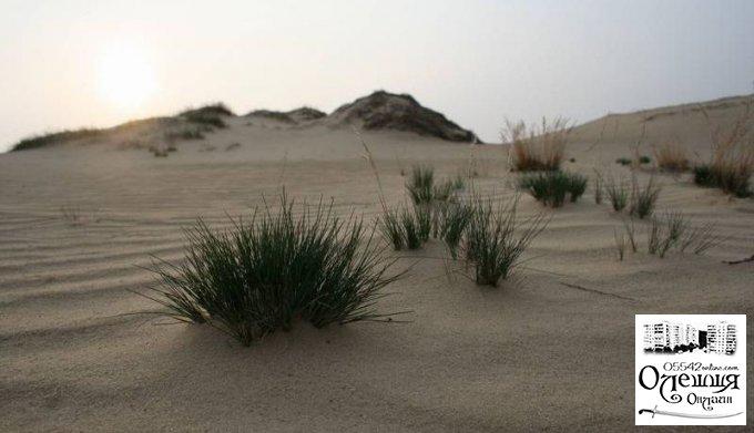 Херсонська ОДА ініціювала створення робочої групи з метою врегулювати ситуацію з національним природним парком «Олешківські піски»