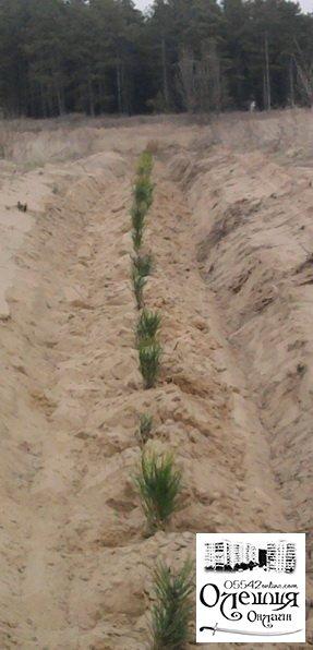Посади свое дерево в Цюрупинском лесу!