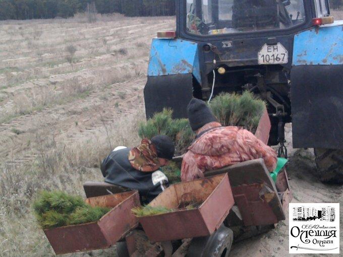 На Цюрупинщині проходить весняна лісокультурна кампанія