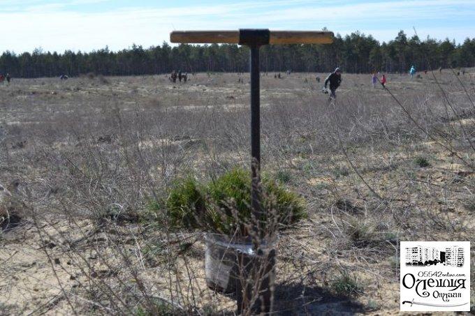 Благодарность всем участникам акции по возрождению лесов Херсонщины (фото)
