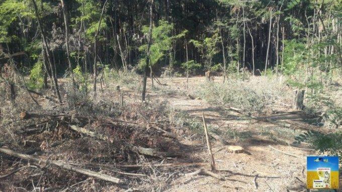 Жители Казачьих Лагерей в шоке от масштабов вырубки лесных массивов (видео)