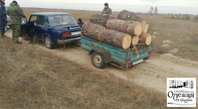 В Олешках процвітає лісове браконьєрство