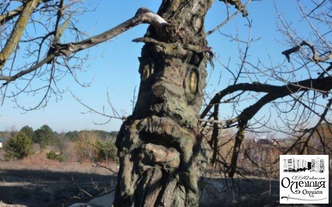 """Під Олешками знайшли """"дерево-лісовика"""""""