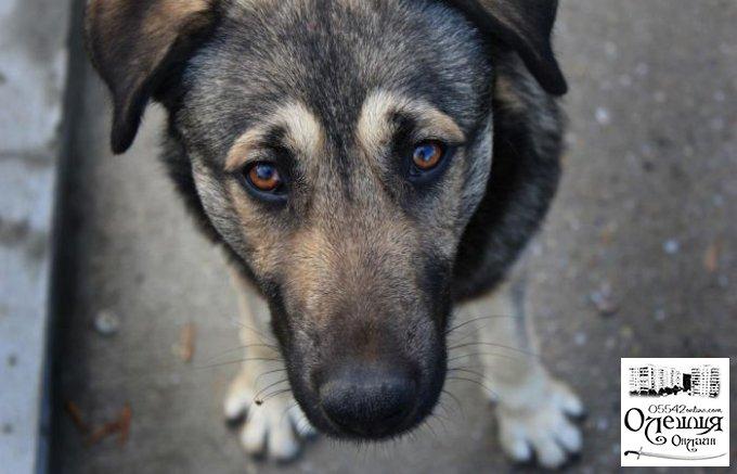 Городская власть в Олешках собак не травит