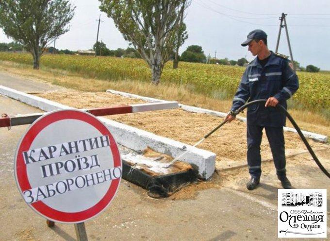 Звернення Олешківського міського голови до громади з приводу поширення АЧС