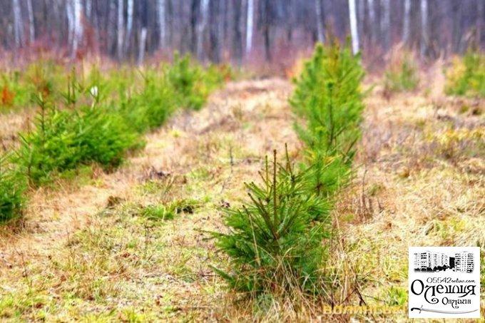 Запрошення на екологічну акцію в Олешках