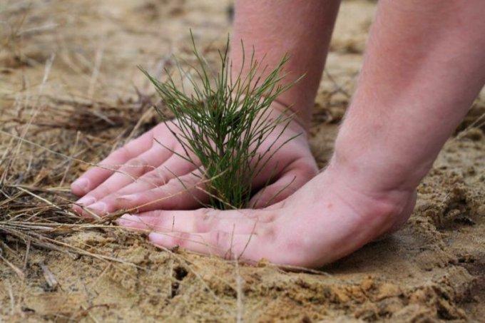 Олешки знову кличуть небайдужих людей Херсонщини створювати штучний ліс