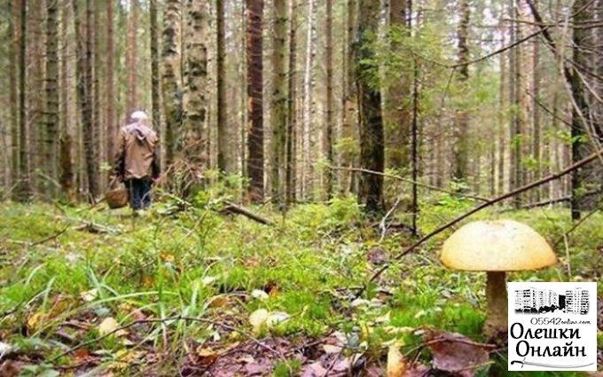 В Олешковском лесу заблудилась женщина