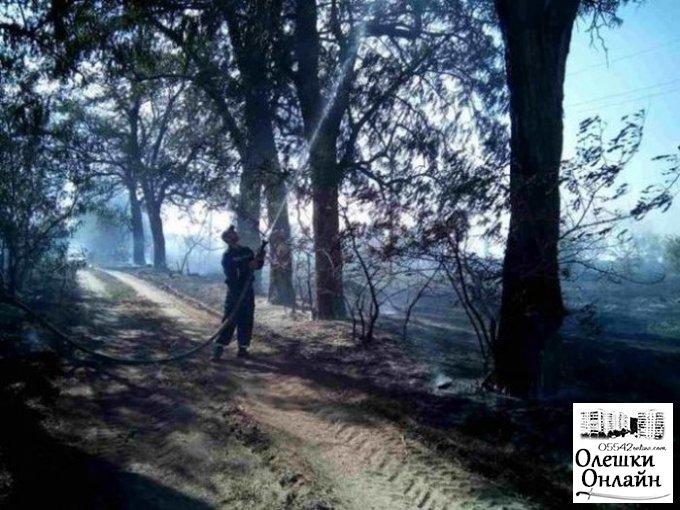 Правоохранители расследуют лесной пожар в Олешковском районе