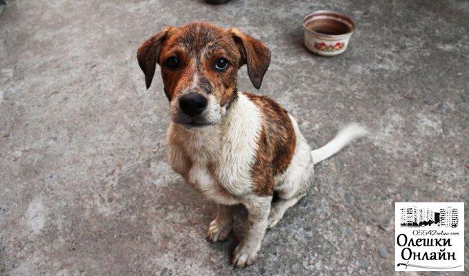 Будущее бездомных собак в Олешках (видео)
