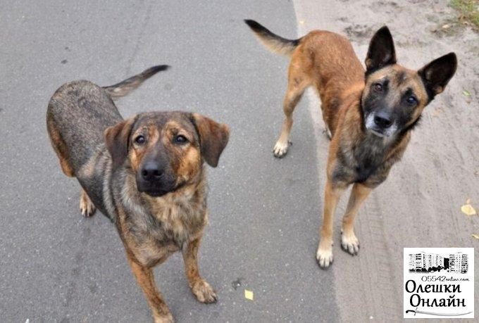 В Олешках розпочата робота по зменшенню популяції бездомних тварин