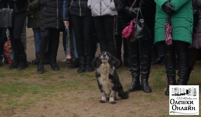 В Олешках завелась поющая собака, которой нужно ехать на Х-фактор (видео)