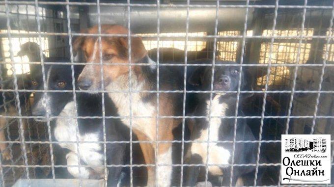 Дмитрий Воронов лично проверил, как стерилизуют собак в Олешках