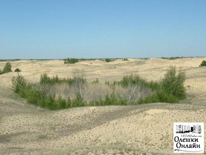 Оазисы Олешковской пустыни зацвели на Херсонщине