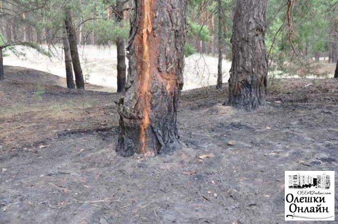 В Олешковском районе молния лес подожгла