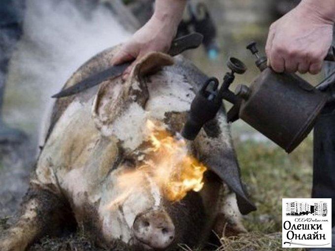 Мясник-любитель обгорел на пару с кабанчиком в Олешковском районе