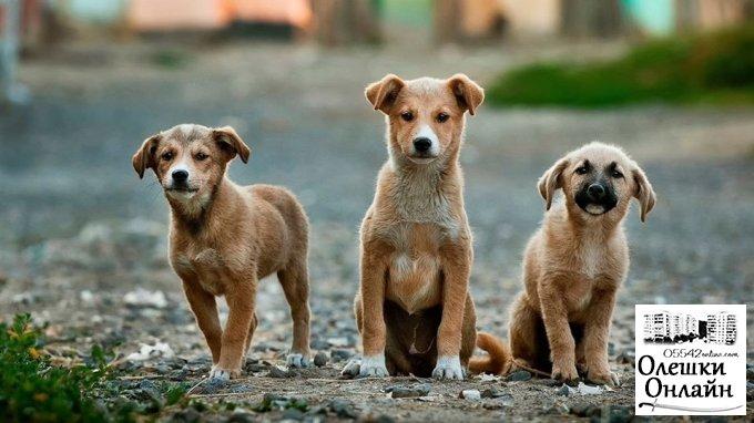Проблема безпритульних тварин в Олешках