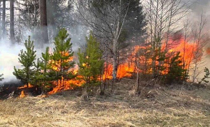 Куда и зачем Рыщук трудоустроил уволенную пожарницу