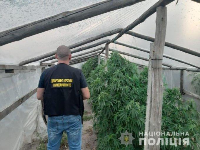 Наркотеплицу обустроил в своем огороде житель Олешек