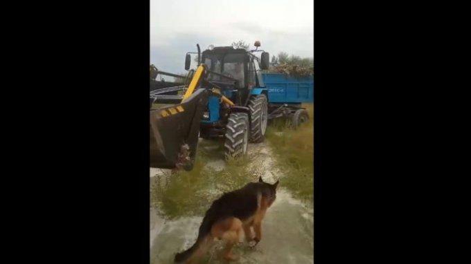 Как коммунальщики в Олешках утилизируют мусор (видео)