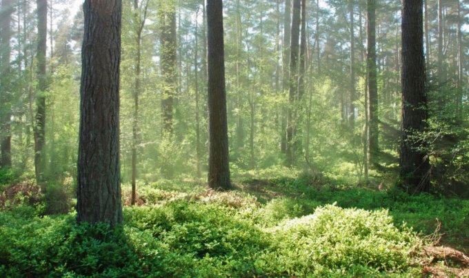 Рыщук пытается добраться до государственной земли в лесу